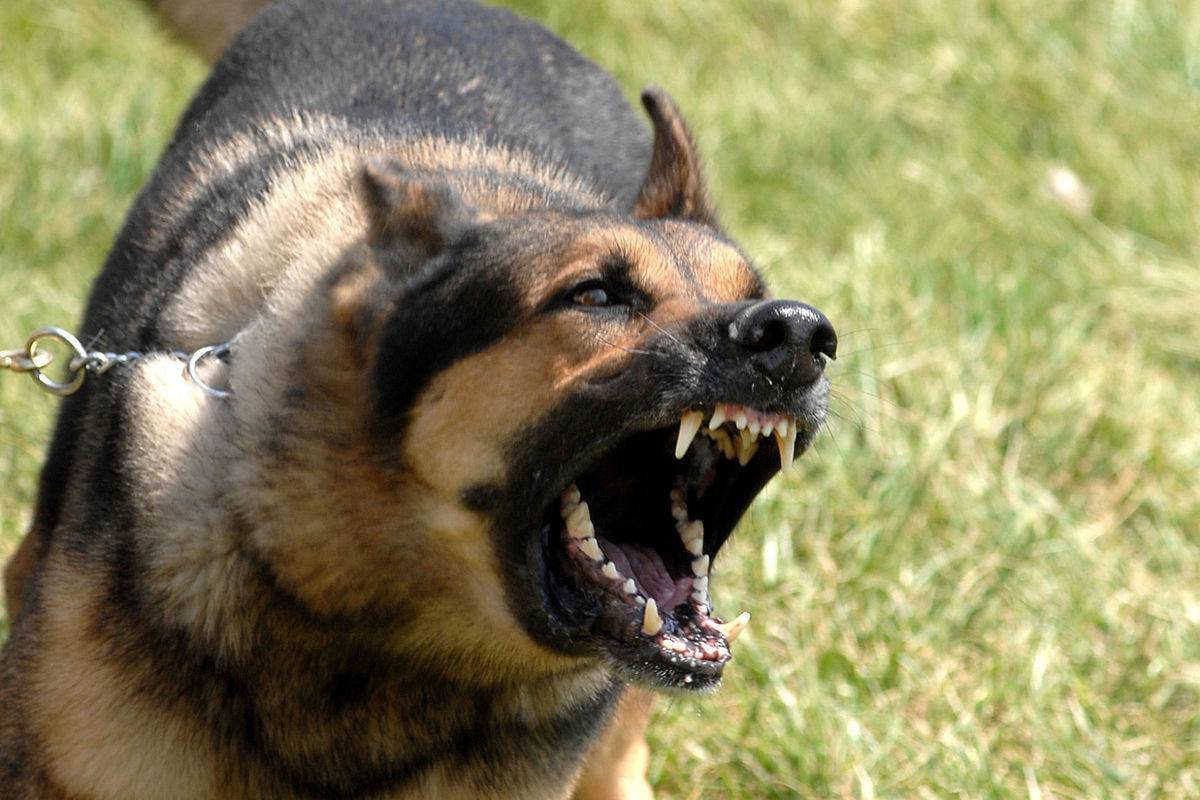 Defending against animal attacks: legal and practical advice